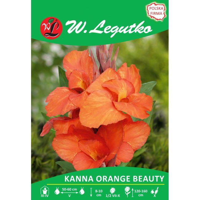 Kanna - zielonolistna - Orange Beauty - pomarańczowa