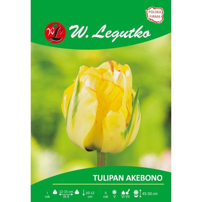 Tulipan - Akebono - pełny - późny - żółty
