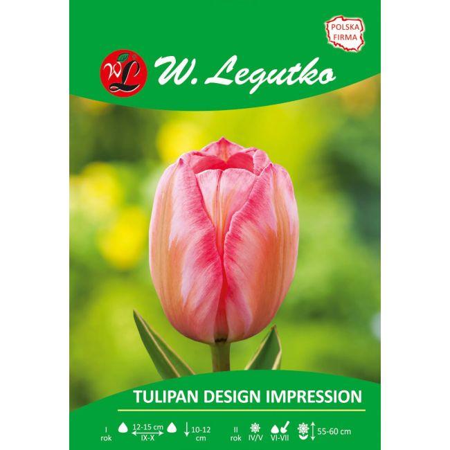 Tulipan - Design Impression - mieszańce Darwina - różowy