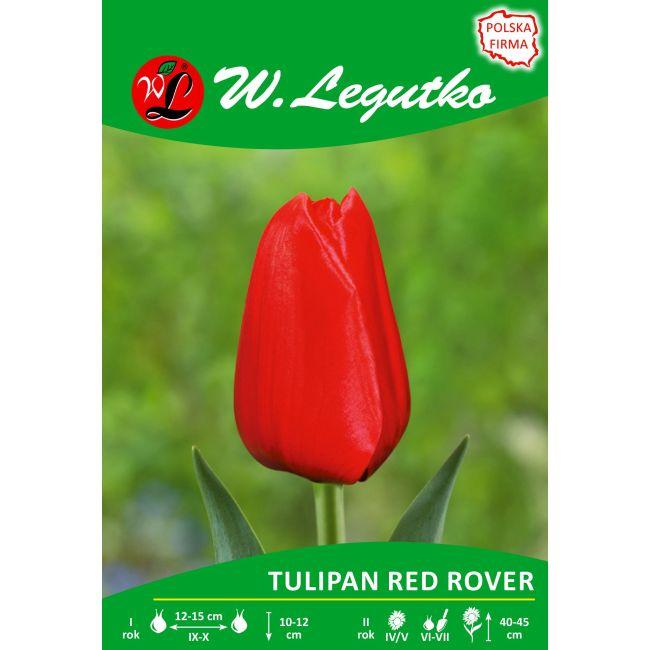 Tulipan - Red Rover - Triumph - czerwony