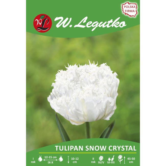 Tulipan - strzępiasty - Snow Crystal