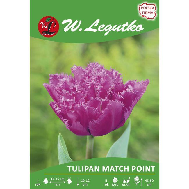 Tulipan - strzępiasty - Match Point