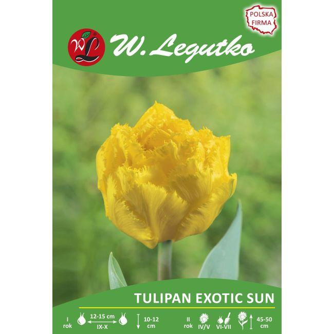 Tulipan - strzępiasty - Exotic Sun - 1szt.