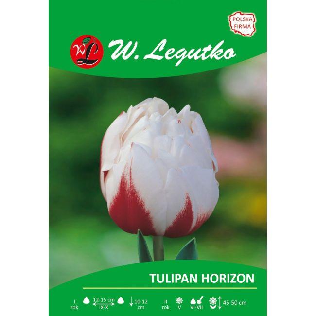 Tulipan - pełny - Horizon - 1szt.