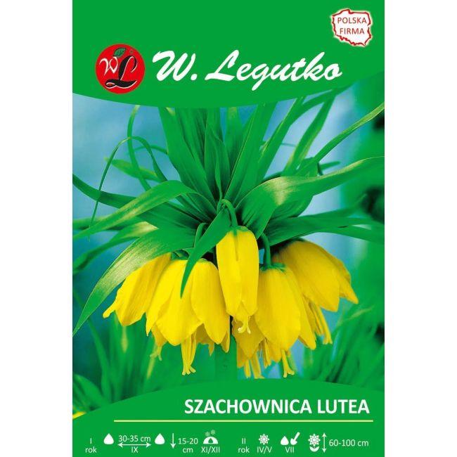 Szachownica cesarska - Lutea - żółta - luz