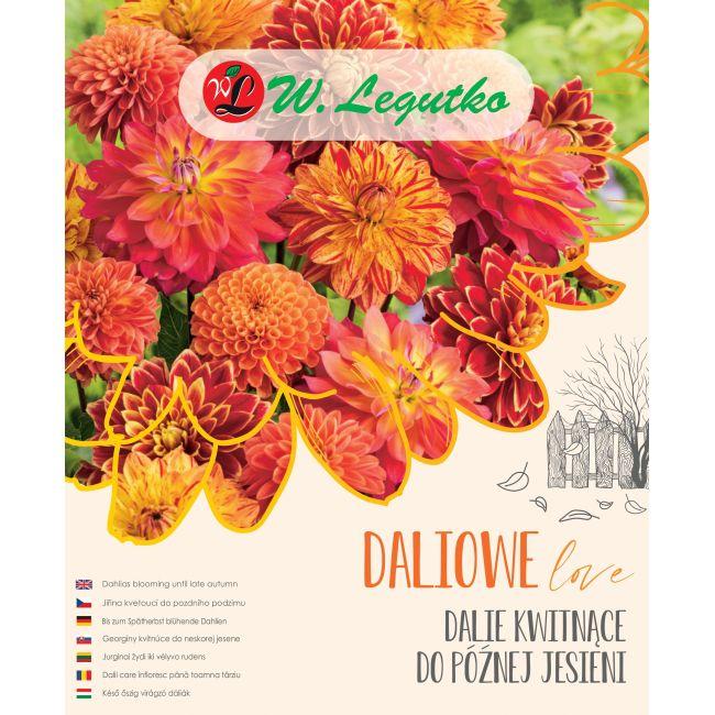 Dalie kwitnące do późnej jesieni - Kompozycja dalii z grupy dekoracyjna - rabatowa oraz kaktusowa rabatowa