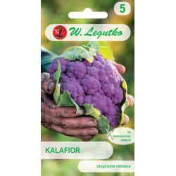 Kalafior Di Sicilia violetto