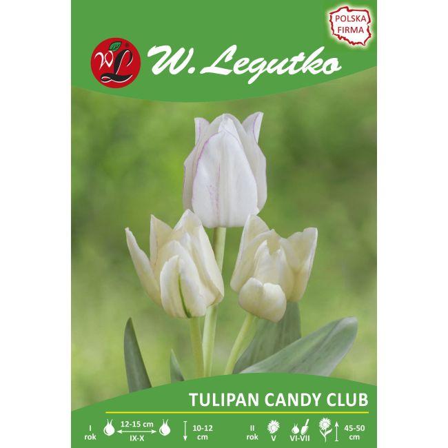 Tulipan Candy Club