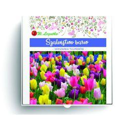 Szaleństwo barw - kompozycja cebul kwiatowych
