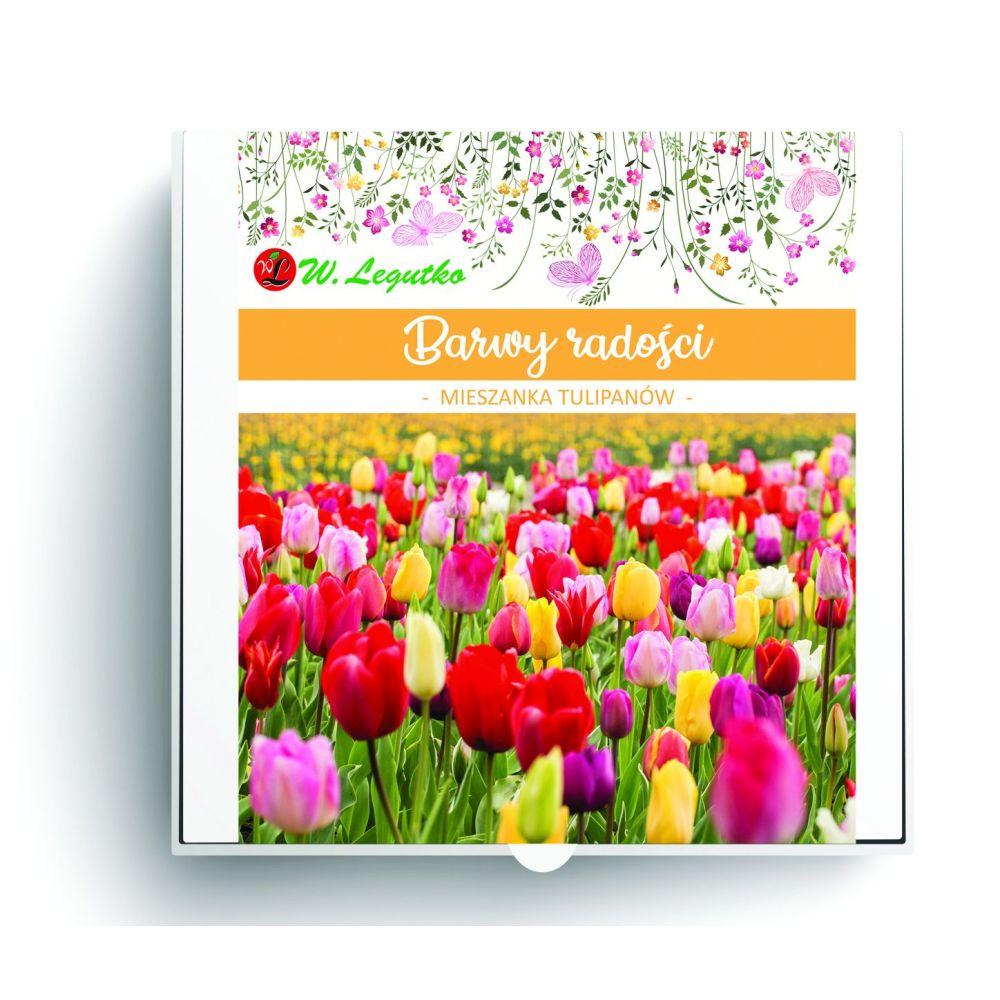 Barwy radości - kompozycja cebul kwiatowych