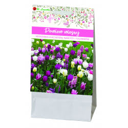 Powiew wiosny - kompozycja cebul kwiatowych