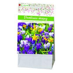 Powitanie wiosny - kompozycja cebul kwiatowych