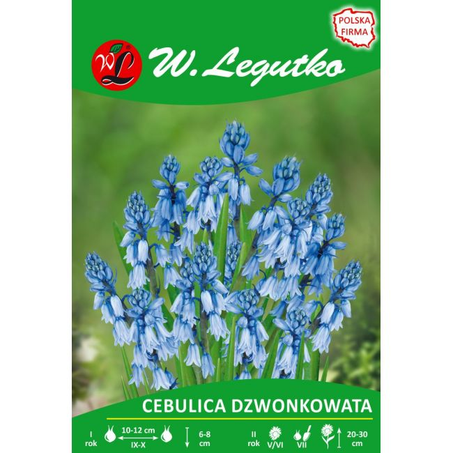 Cebulica dzwonkowata - niebieska