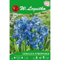 Cebulica syberyjska niebieska