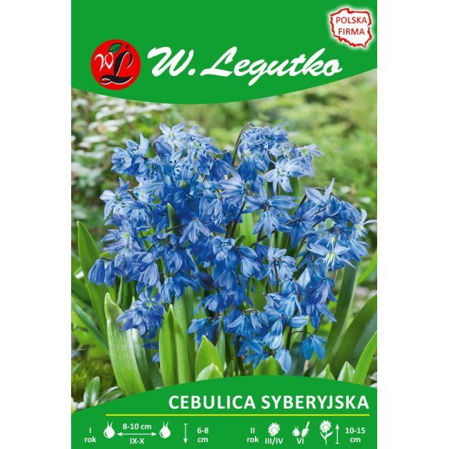 Cebulica syberyjska - niebieska