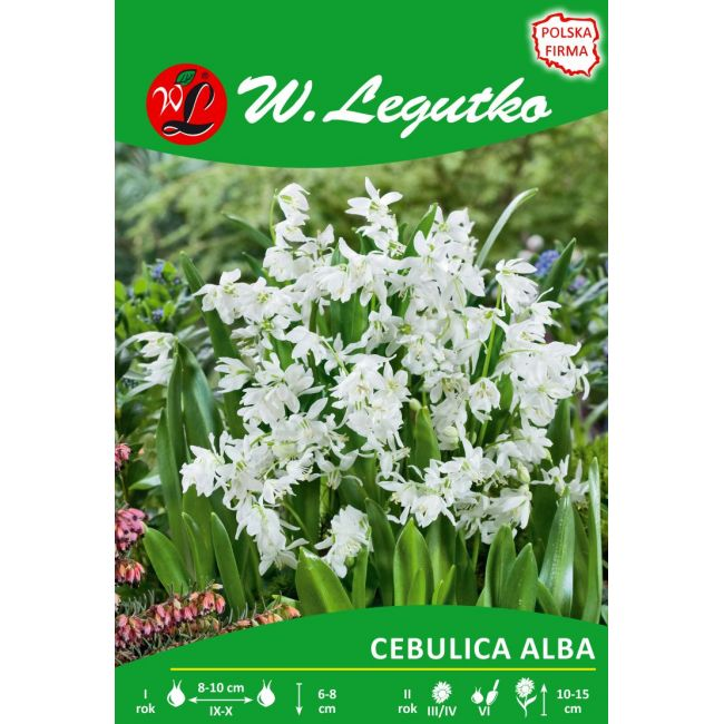 Cebulica syberyjska - Alba - biała