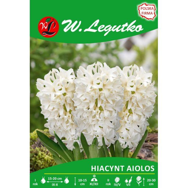 Hiacynt Aiolos
