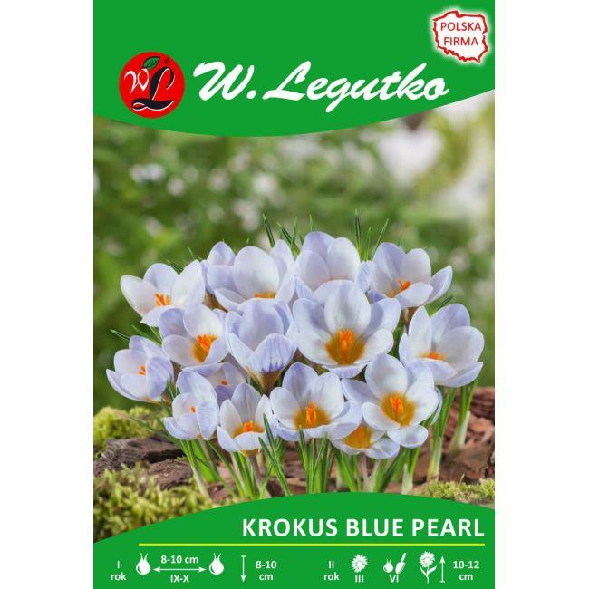 Krokus - Blue Pearl - Chrysanthus - niebieski