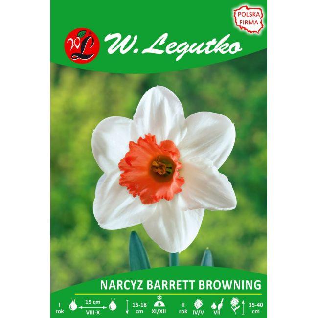 Narcyz - Barrett Browning - drobnoprzykoronkowy - biały z pomarańczowym przykoronkiem