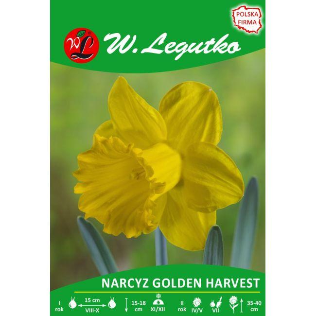 Narcyz - Golden Harvest - trąbkowy - żółty