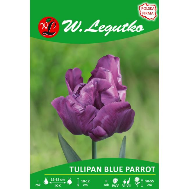 Tulipan Blue Parrot