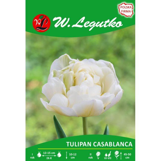 Tulipan - Casablanca - pełny - późny - biały
