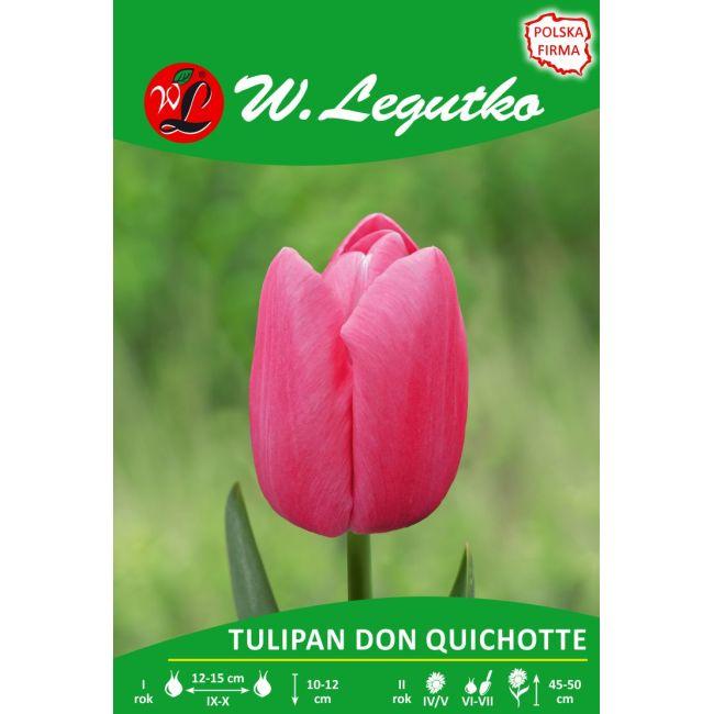 Tulipan - Don Quichotte - Triumph - różowy