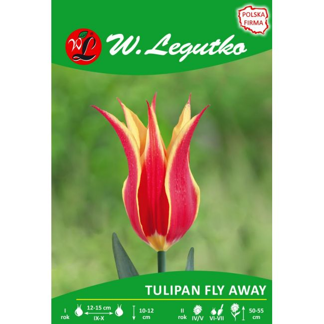 Tulipan Fly Away