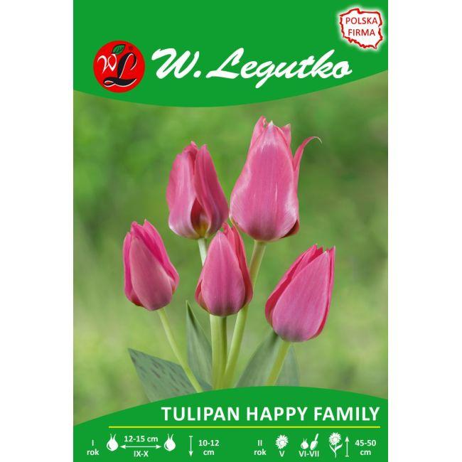 Tulipan - Happy Family - wielokwiatowy - różowy