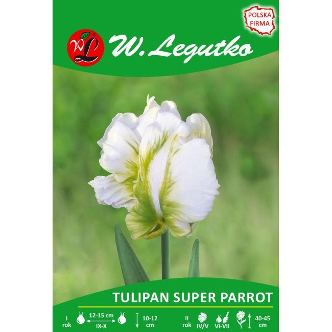 Tulipan - Super Parrot - papuzi - biały